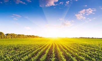 employment lawyers for agriculture london reading